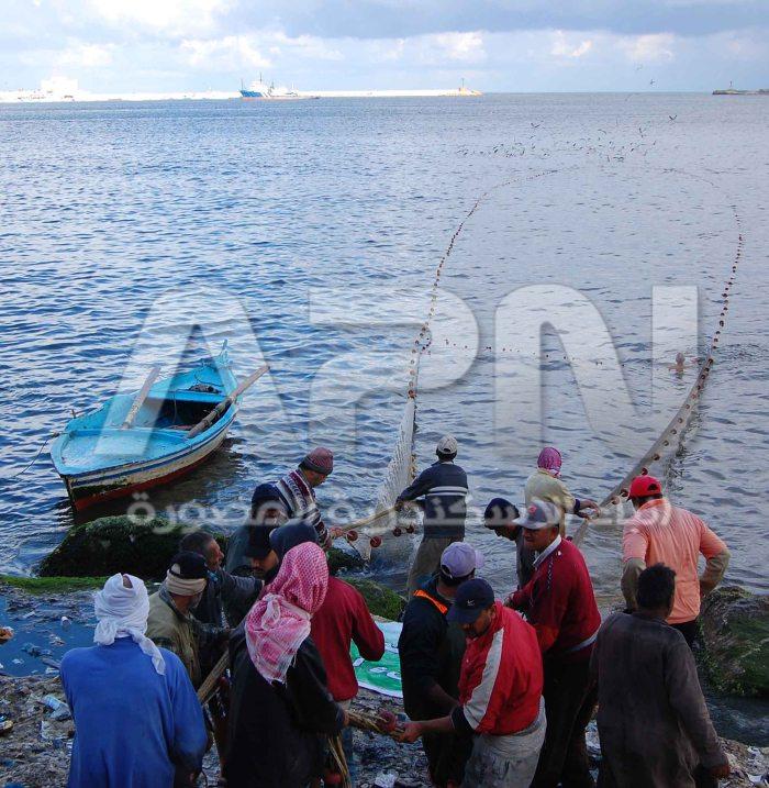 الصيديون بالاسكندرية يقومون بالصيد باسلوب الجرافة